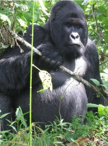 DRK - Park Virunga