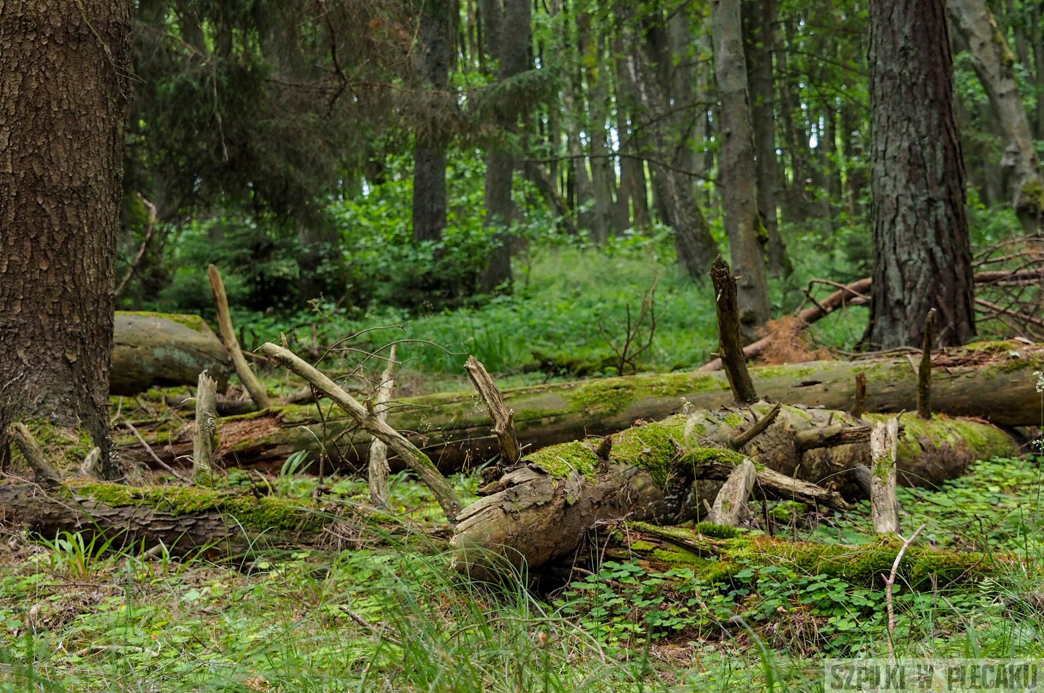 las Słowińskiego Parku Narodowego