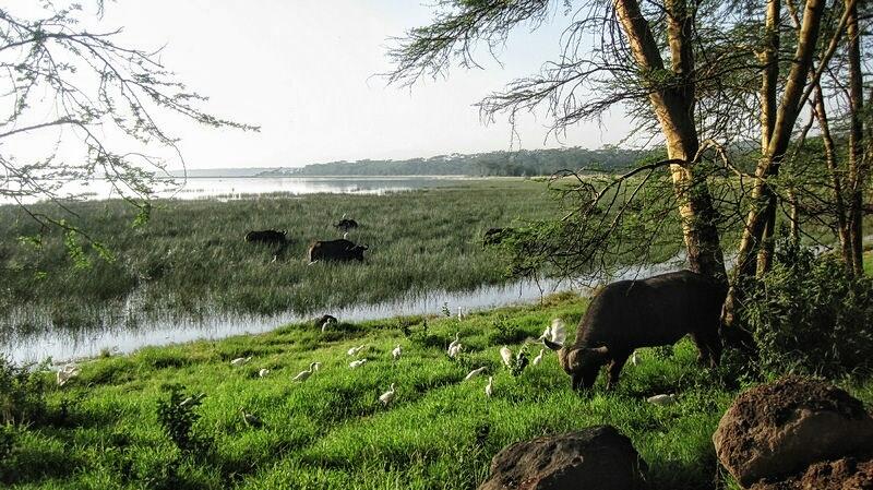 Najpiękniejsze parki narodowe i rezerwaty w Kenii, które musisz odwiedzić!