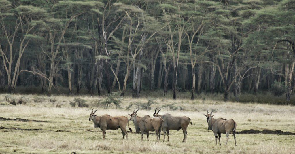 Jakie zwierzęta zobaczysz na safari w Kenii i Tanzanii?