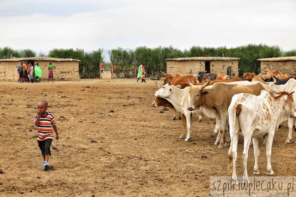 Jeden dzień z życia Masajki czyli jak spełniłam swoje marzenie