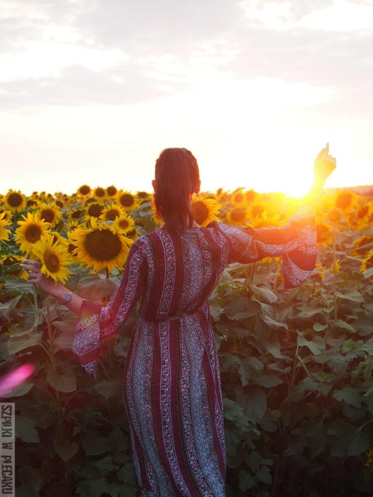 chorwacka wieś - słoneczniki