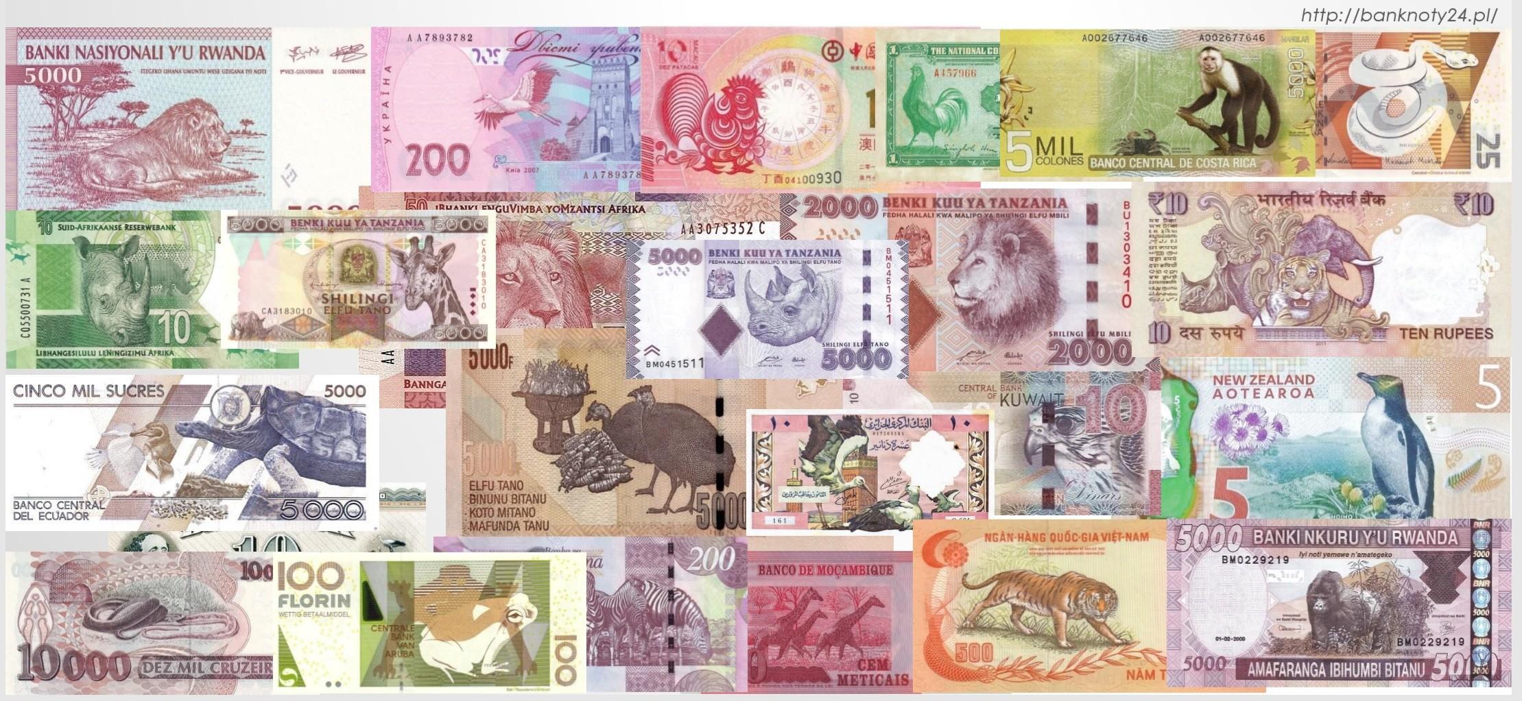 Kobiety na banknotach – gdzie one są?