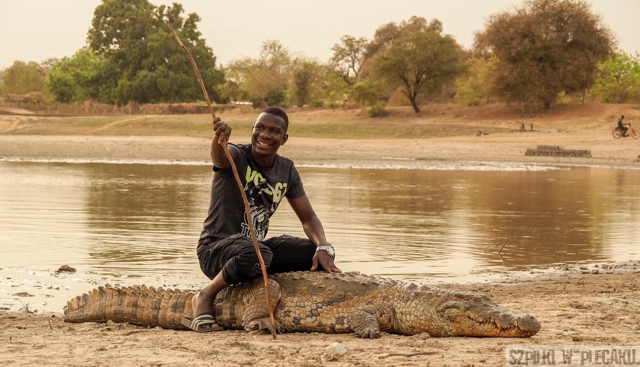 święte krokodyle Burkina Faso