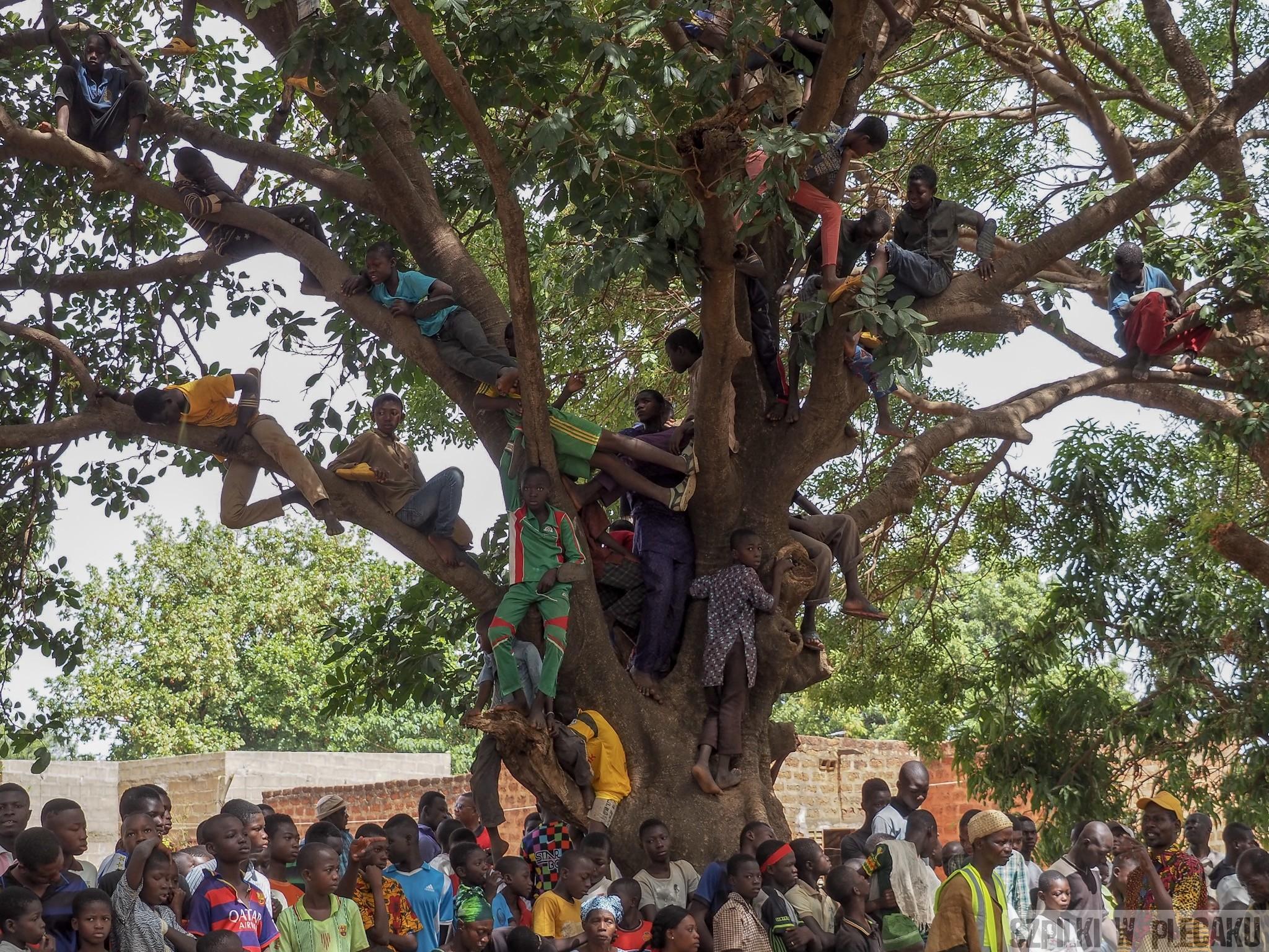 tree audience Burkina Faso audience