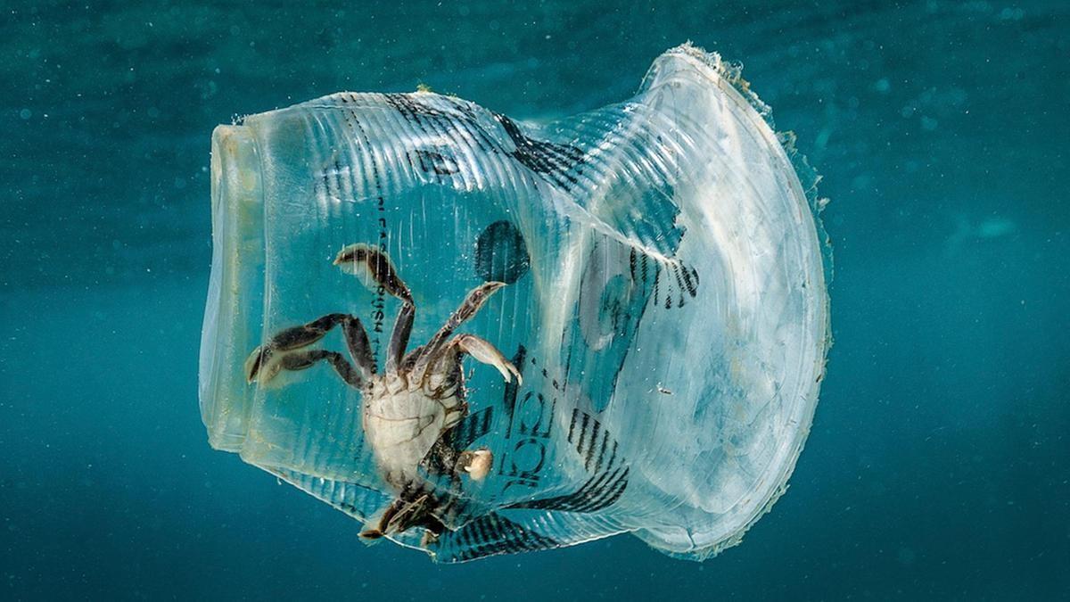 Światowy Dzień Oceanów – co TY możesz zrobić dla ochrony wód przed plastikiem?