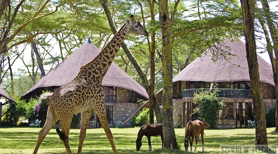 Lake-Naivasha-Sopa-Resort-2