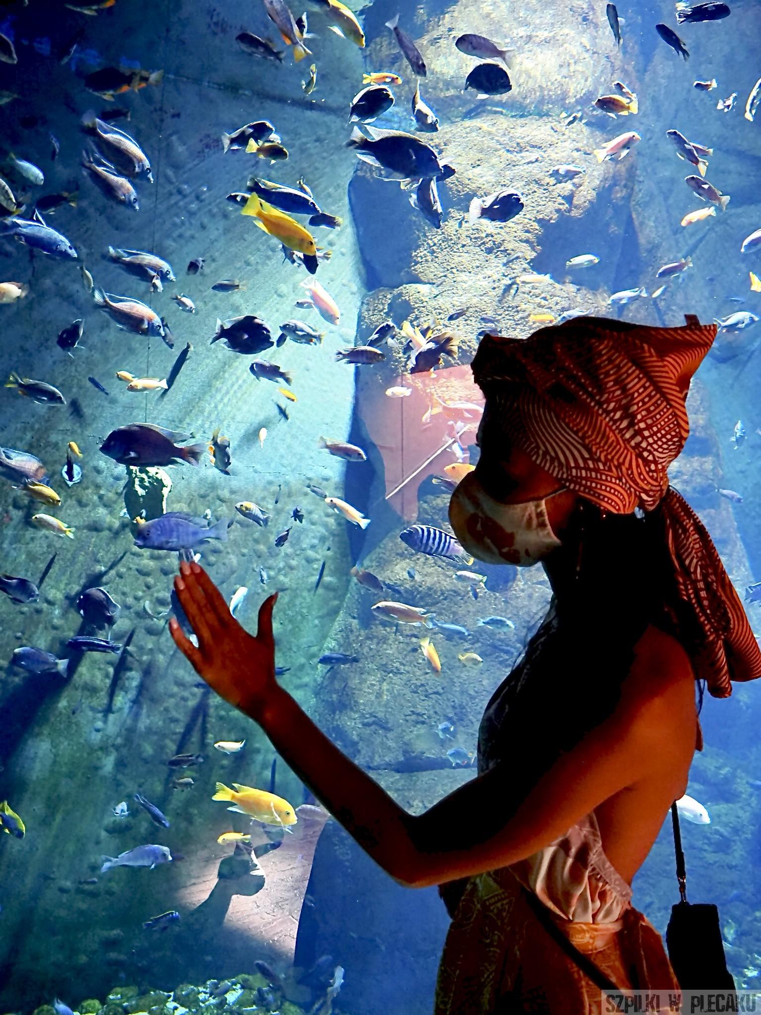 Afrykarium - Morze Czerwone - - Szpilki w Plecaku - Ewa Chojnowska Lesiak