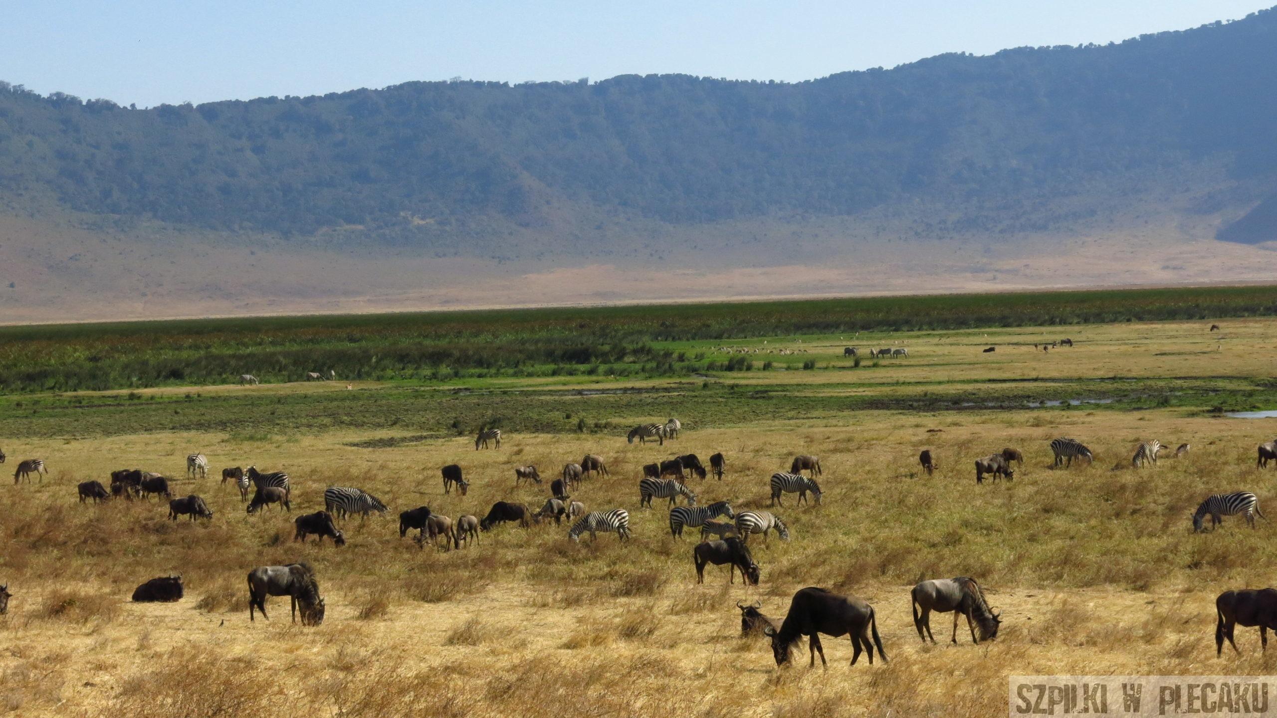 Ngorongoro - Tanzania - Szpilki w plecaku (2)