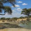 Park narodowy Tarangire Tanzania - Szpilki w plecaku