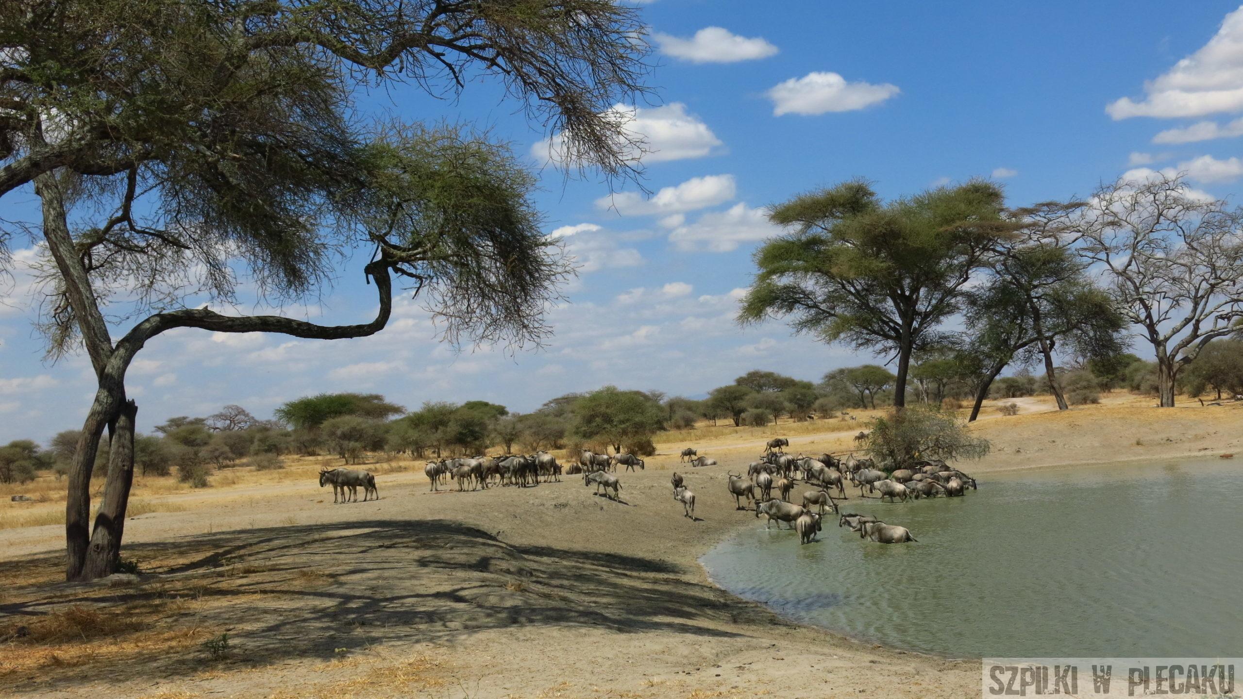 Wycieczka na safari, czyli Parki Narodowe w Tanzanii