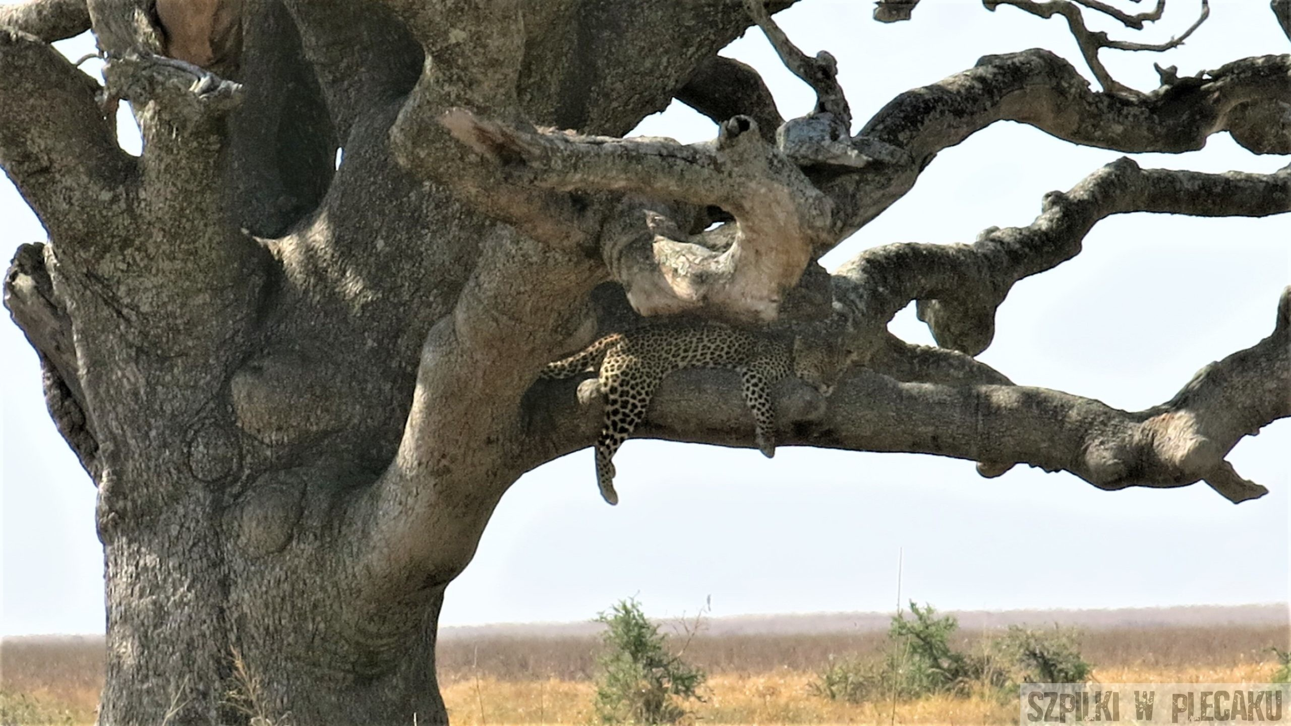 Serengeri - Tanzania - Szpilki w plecaku