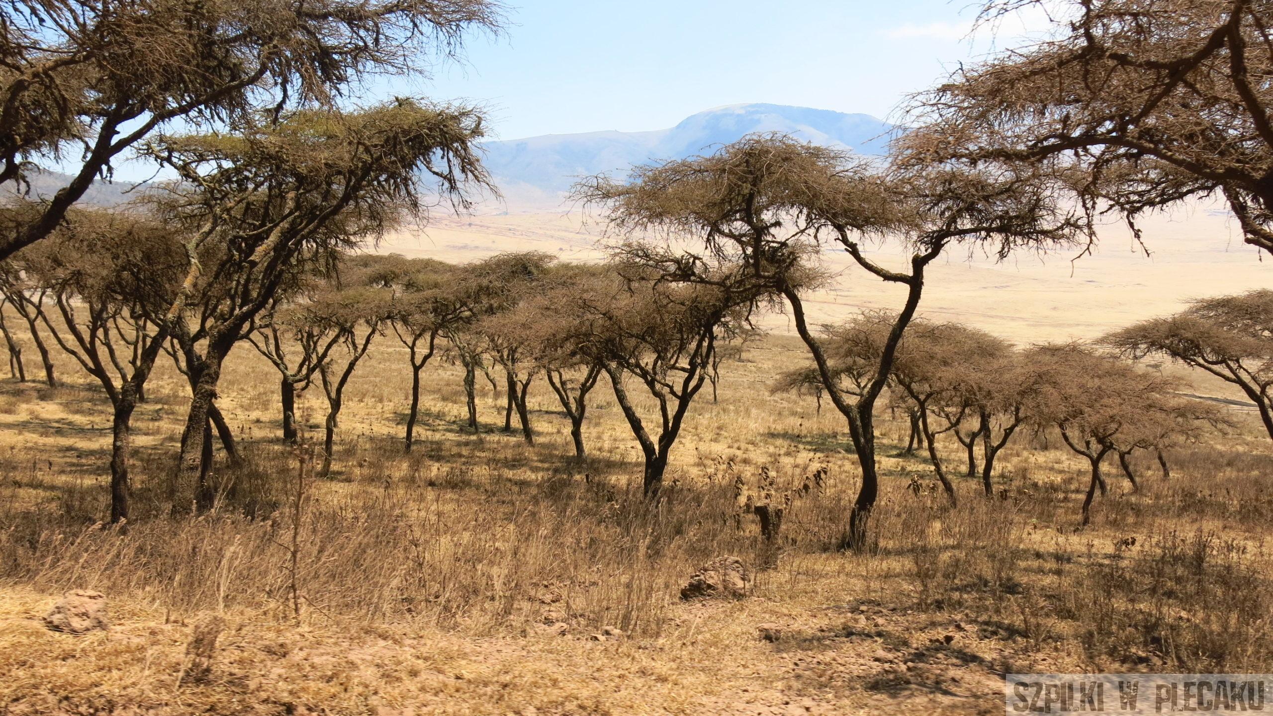 Serengeti - Tanzania - Szpilki w plecaku