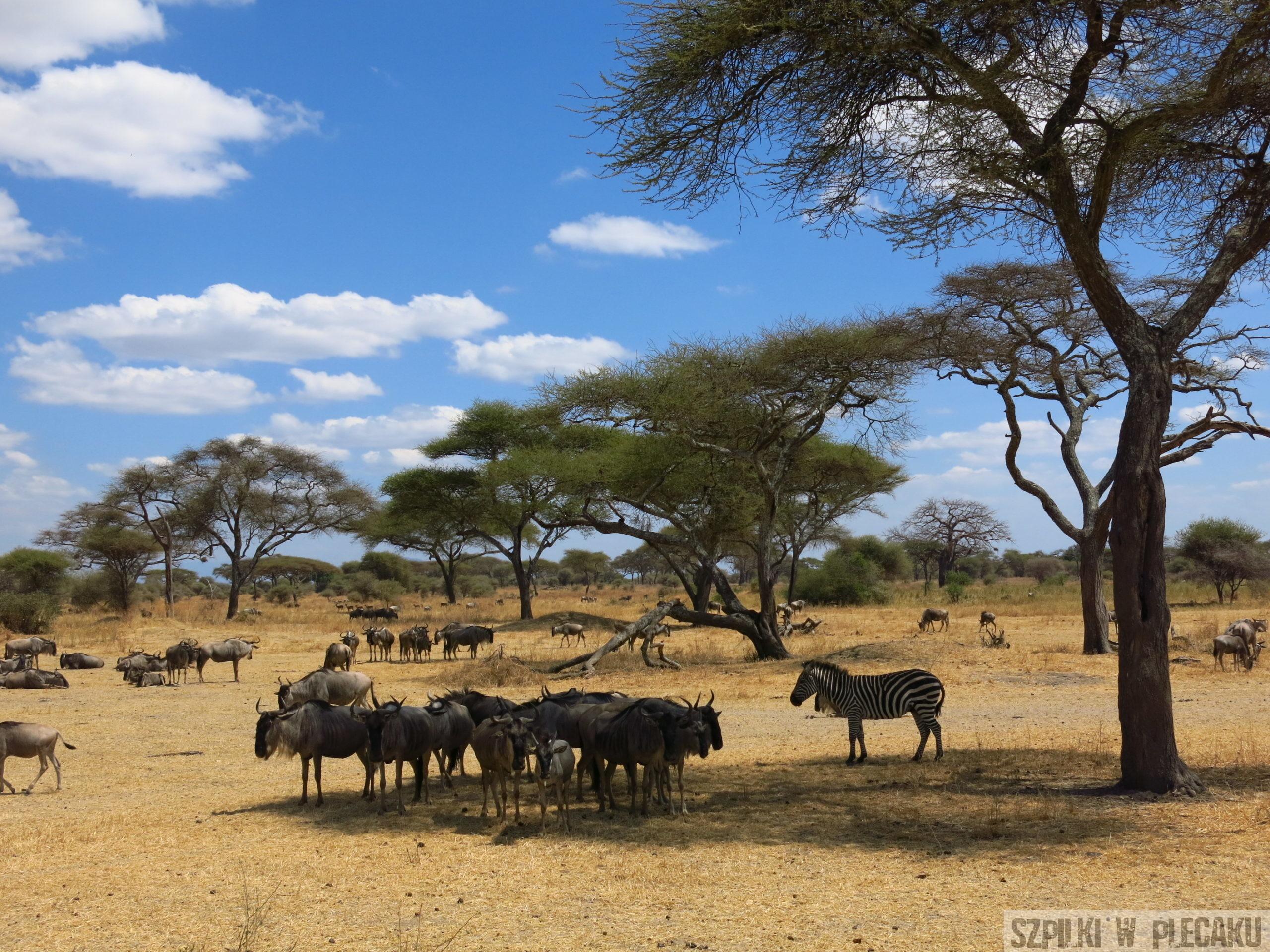 Park Narodowy Tarangire - Tanzania - Szpilki w plecaku