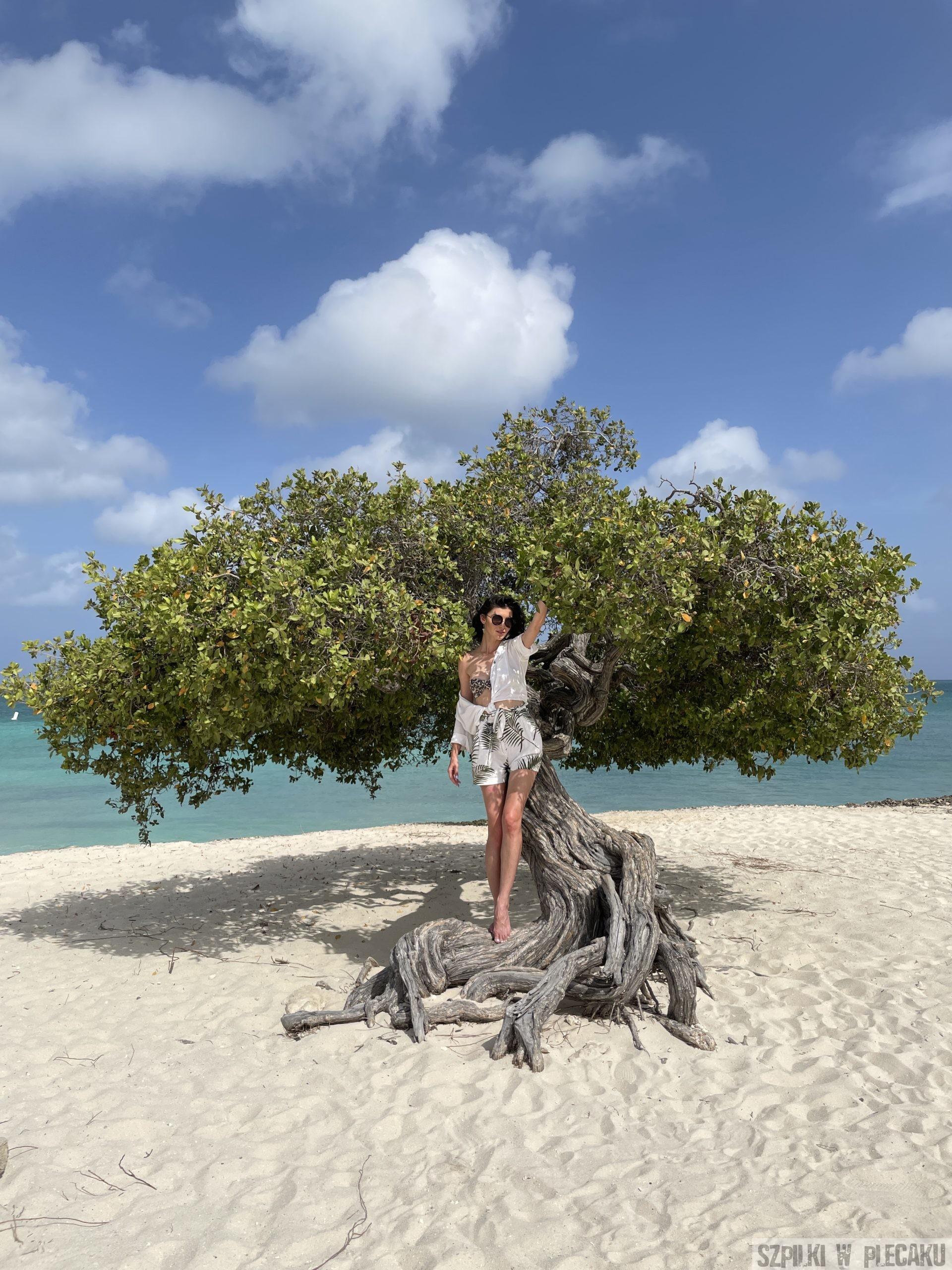 Divi Divi - Aruba - Szpilki w Plecaku