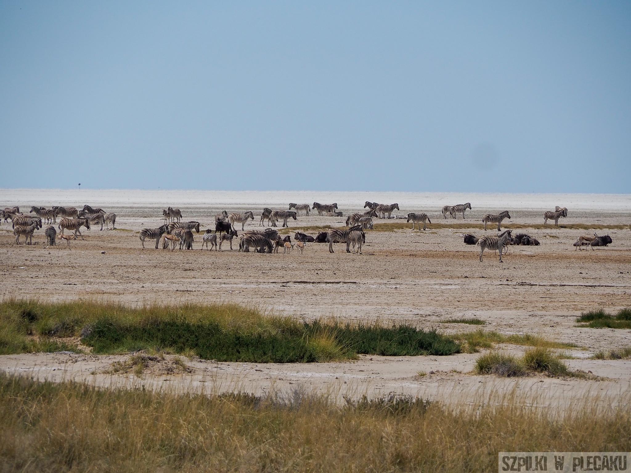 Etosha Park - Namibia - Szpilki w plecaku